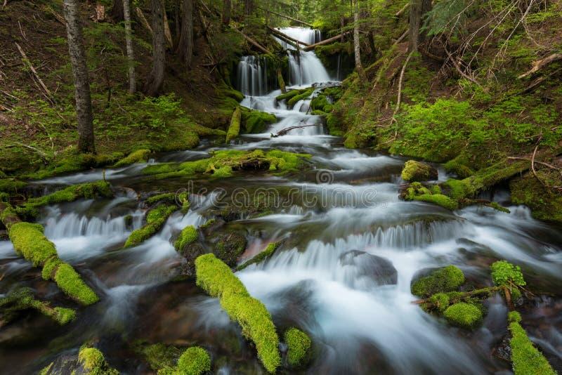 Autumn Forest Landscape With Beautiful Fallings-Kaskaden des Nebenflusses und und farbige Blätter auf den Steinen Kalter Gebirgss stockbilder