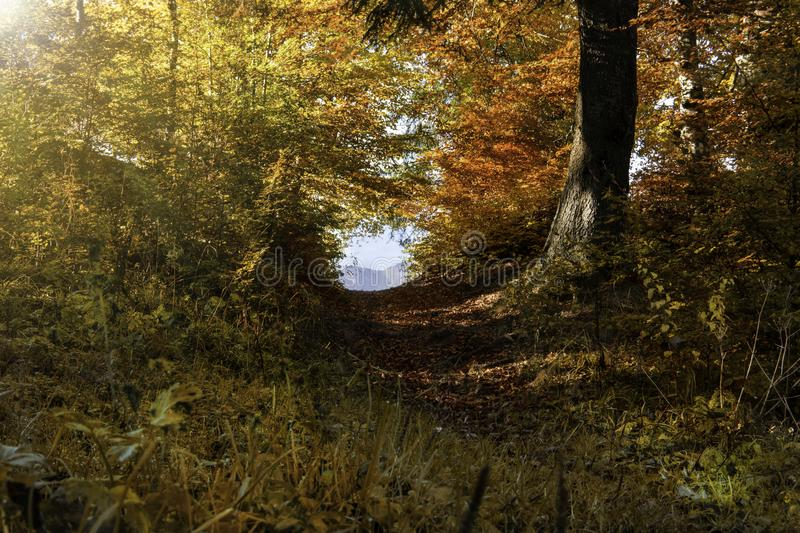 Autumn forest landscape with colorful trees and footpath. Autumn forest landscape with colorful trees, footpath and the sun shining through the trees royalty free stock photography