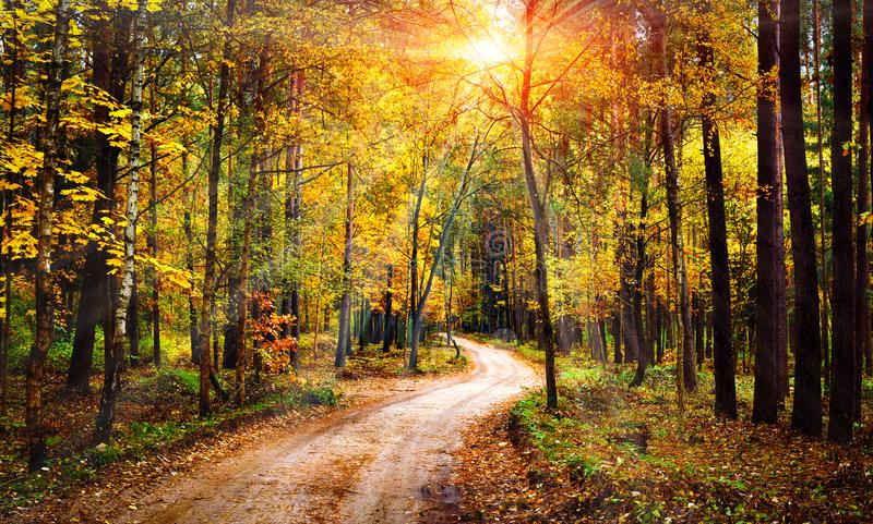 Autumn forest landscape on sunny bright day. Vivid sunbeams through trees in forest. Colorful nature at fall season. royalty free stock images
