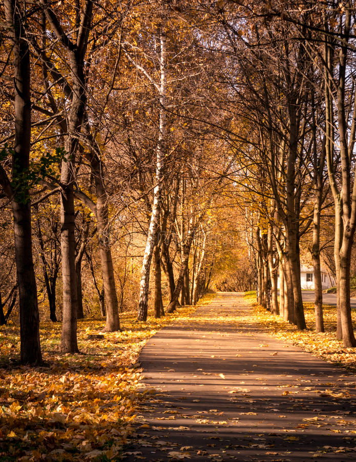 Download Autumn forest stock photo. Image of beautiful, autumn - 36056610