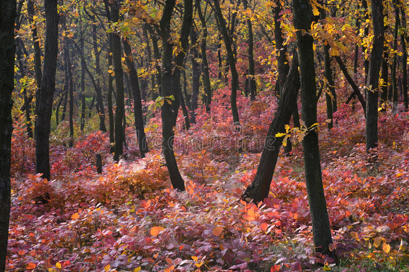 Autumn forest. Majestic autumn forest of the Dnepropetrovsk. Ukraine stock photo