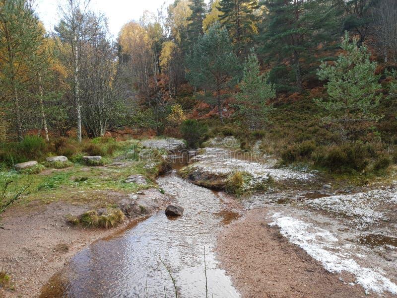 Autumn Forest met Rivier en Steen stock fotografie