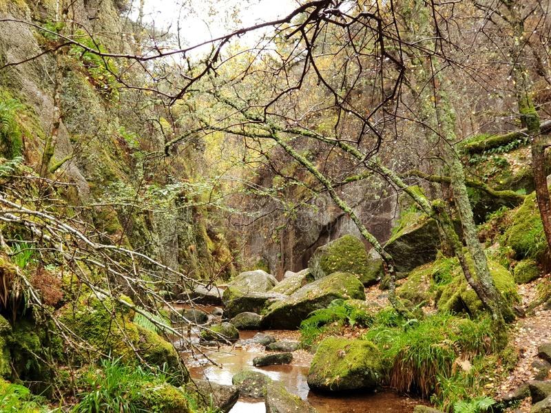 Autumn Forest mit Fluss und Stein stockbild