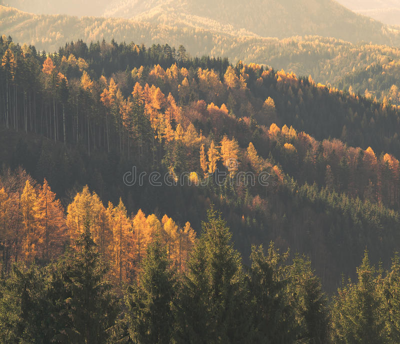 Autumn forest. Mixed forest in autumn light royalty free stock photo