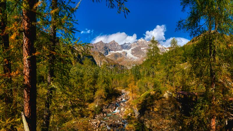 Autumn in the forest with Monte Rosa in background stock photography