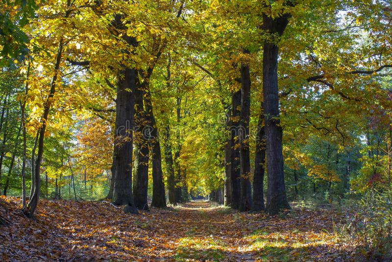 Autumn forest in national park De hoge Veluwe, Netherla royalty free stock photos