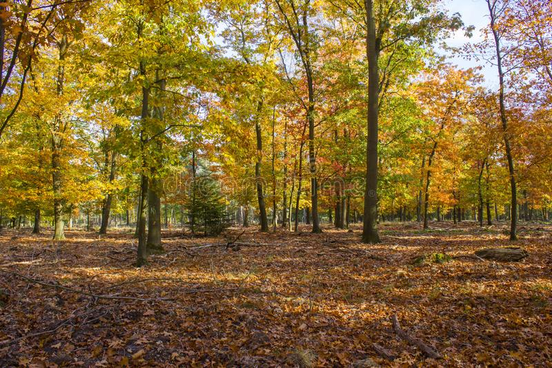 Autumn forest in national park De hoge Veluwe, the Netherlands royalty free stock photography