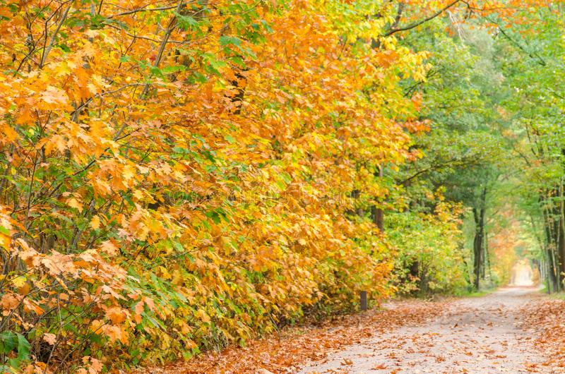 Autumn forest nature background. Autumn, fall forest. Path of red leaves towards light stock photos