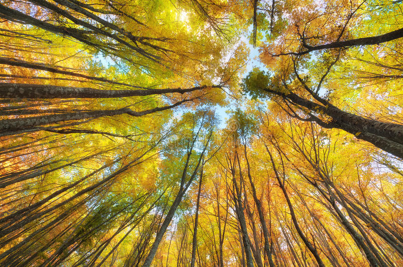 Into the autumn forest. royalty free stock image