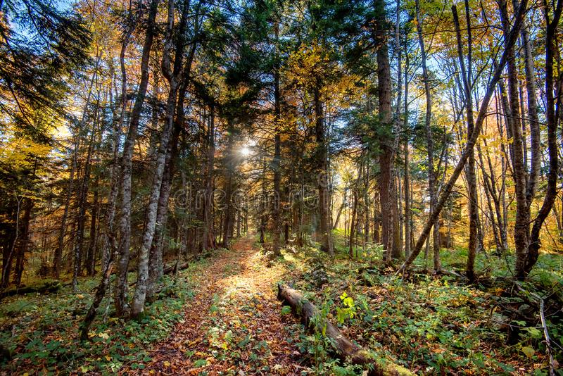 Autumn Forest Nature Paisagem bonita com passeio foto de stock