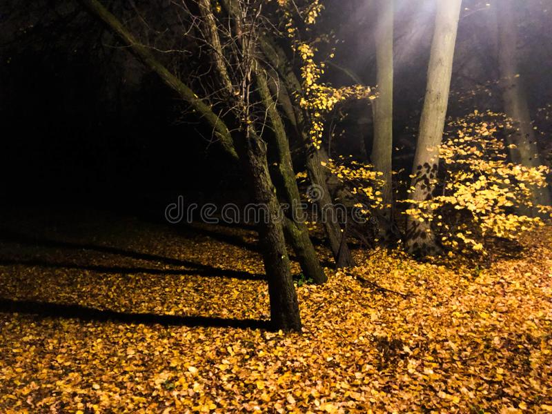 Autumn in the forest in night. Creepy forest royalty free stock photography