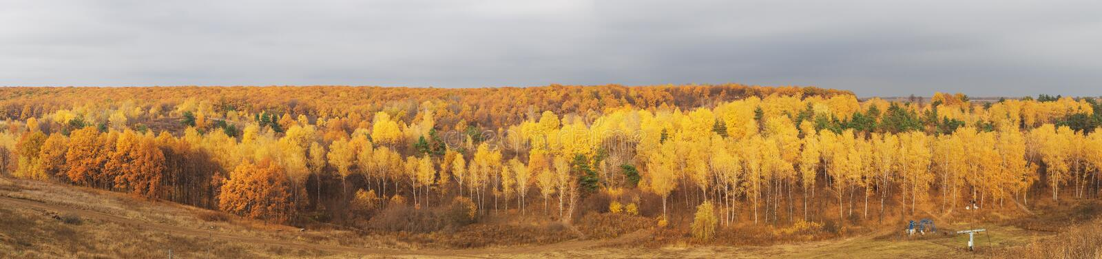 Autumn forest october panorama royalty free stock photo