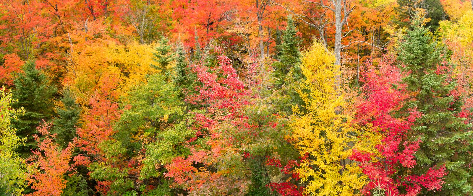 Autumn Forest Panorama stock photography