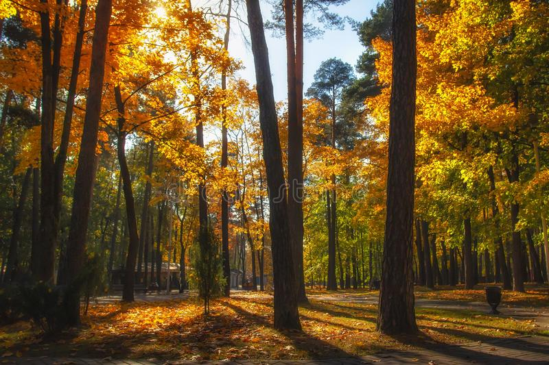 Autumn forest park with colorful trees in sunlight. Fall nature landscape royalty free stock image