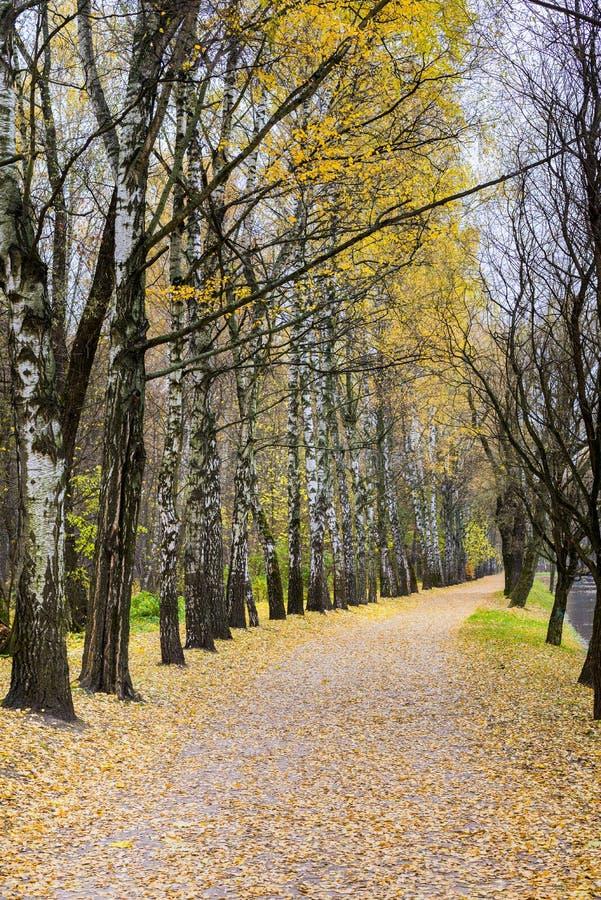 Autumn Forest Park Rússia fotos de stock royalty free