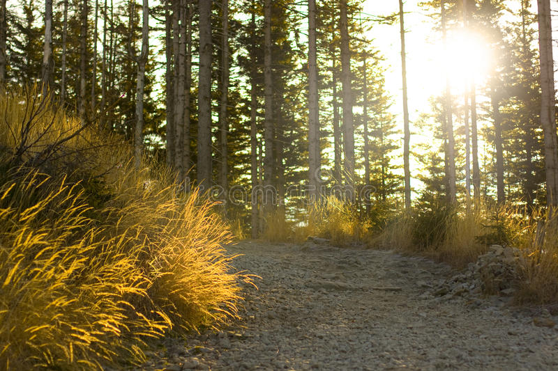 Download Autumn forest path stock photo. Image of hiking, crossing - 22068492
