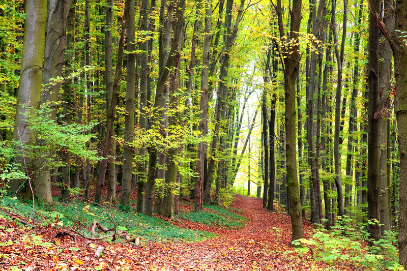 Download Autumn forest path stock photo. Image of peaceful, natural - 27386888