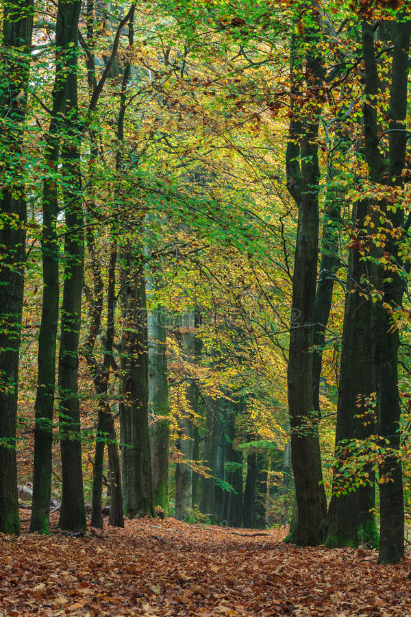 Download Autumn Forest Path In The Dutch Park Veluwe Stock Image - Image: 27335797