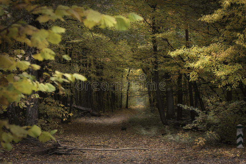 Autumn forest. The path in the autumn forest. falling leaves stock photos