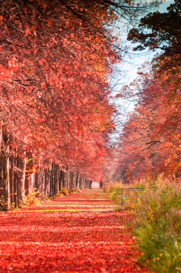 Download Autumn forest path stock photo. Image of illuminated - 34708840