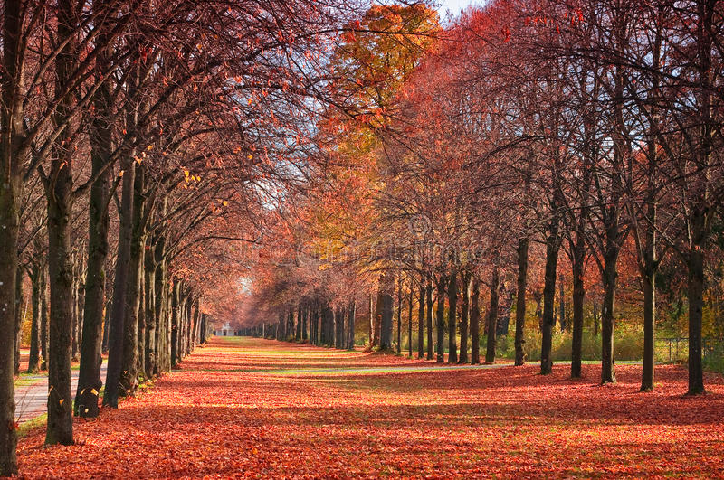 Autumn forest path. With falling red leaves stock photos