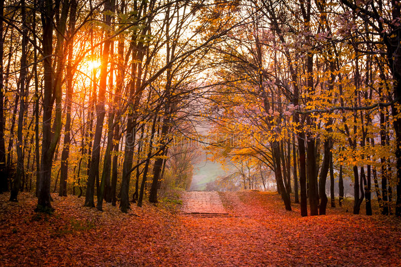 Autumn forest path in sunset. Autumn forest path road with falling red leaves in sunset stock photo