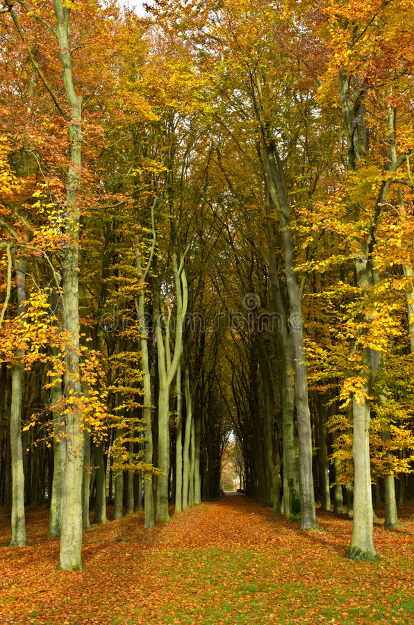 Autumn forest path royalty free stock photo
