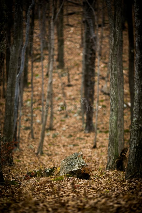 Autumn forest without people. royalty free stock images