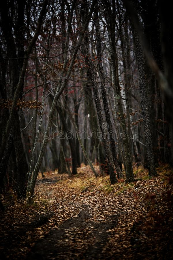 Autumn forest without people. stock image
