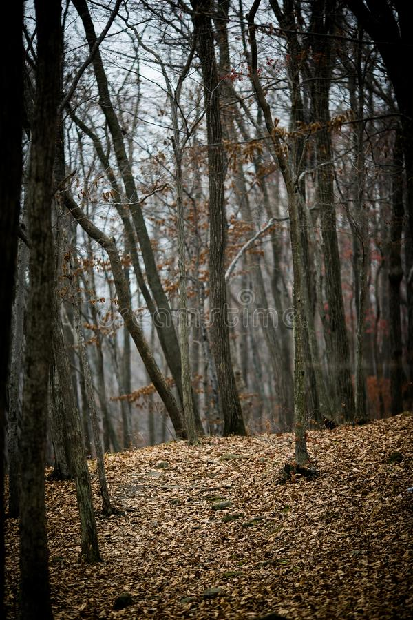 Autumn forest without people. stock images