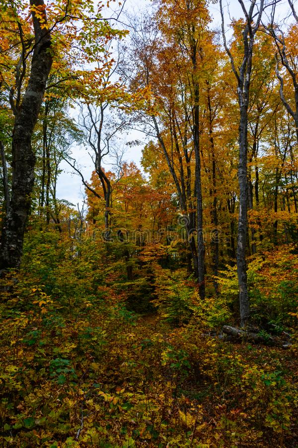 Autumn forest in Pictured Rocks, Munising, MI, USA. With colorful trees royalty free stock photos