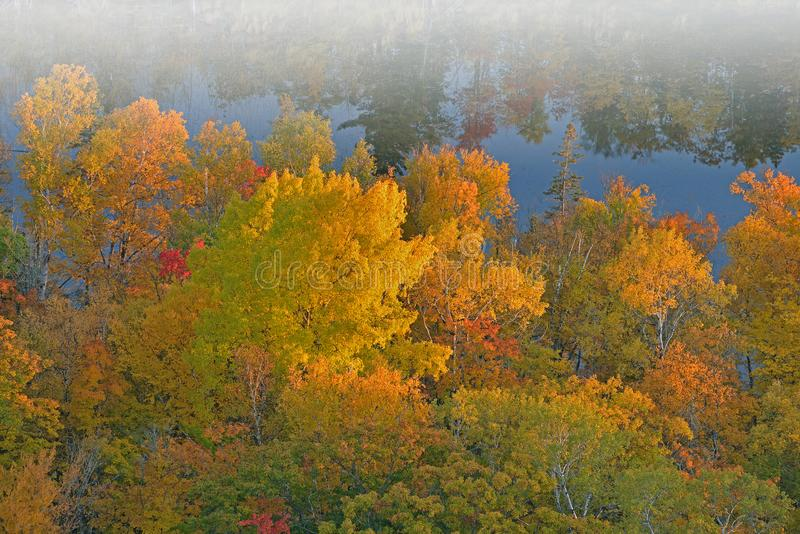 Autumn Forest, Pond, and Reflections royalty free stock photography