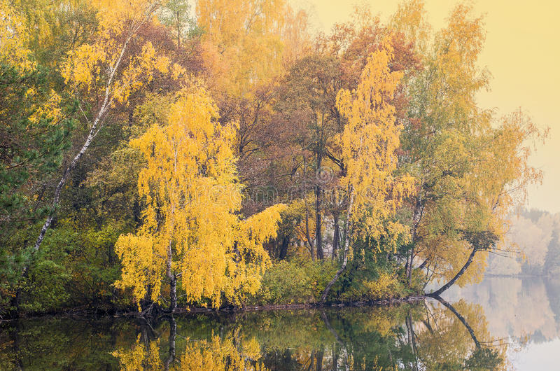 Autumn forest reflected on lake stock images