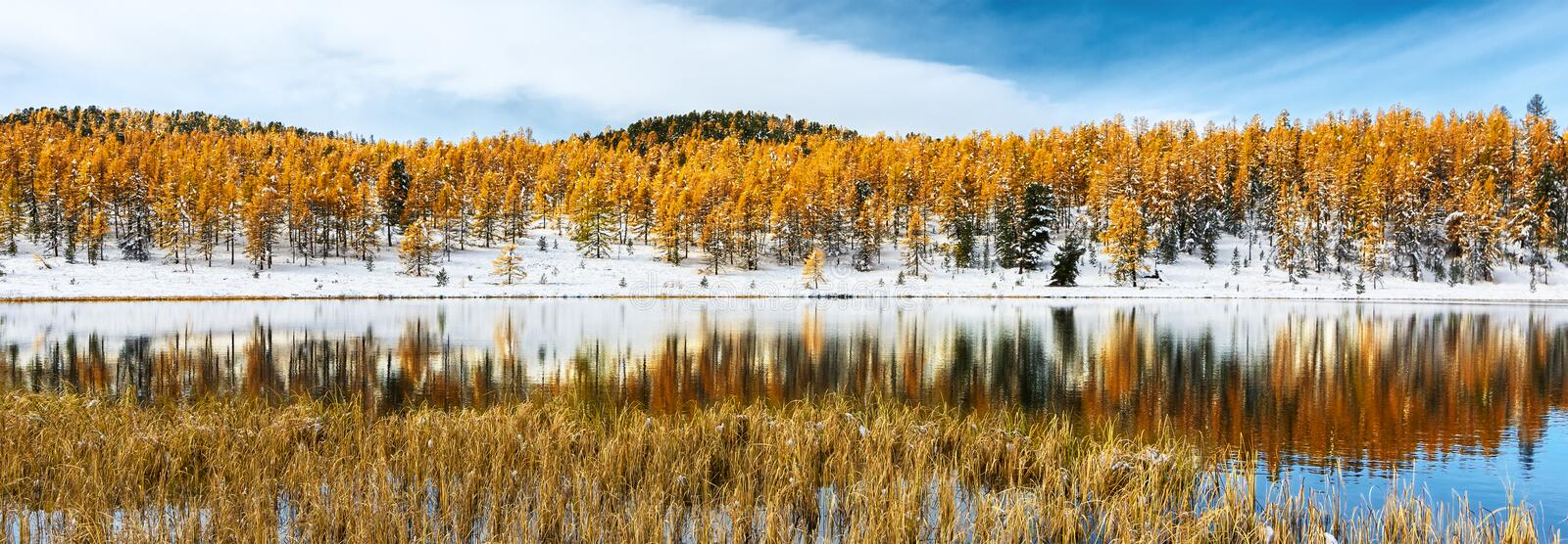 Autumn forest is reflected in a mountain lake stock photo
