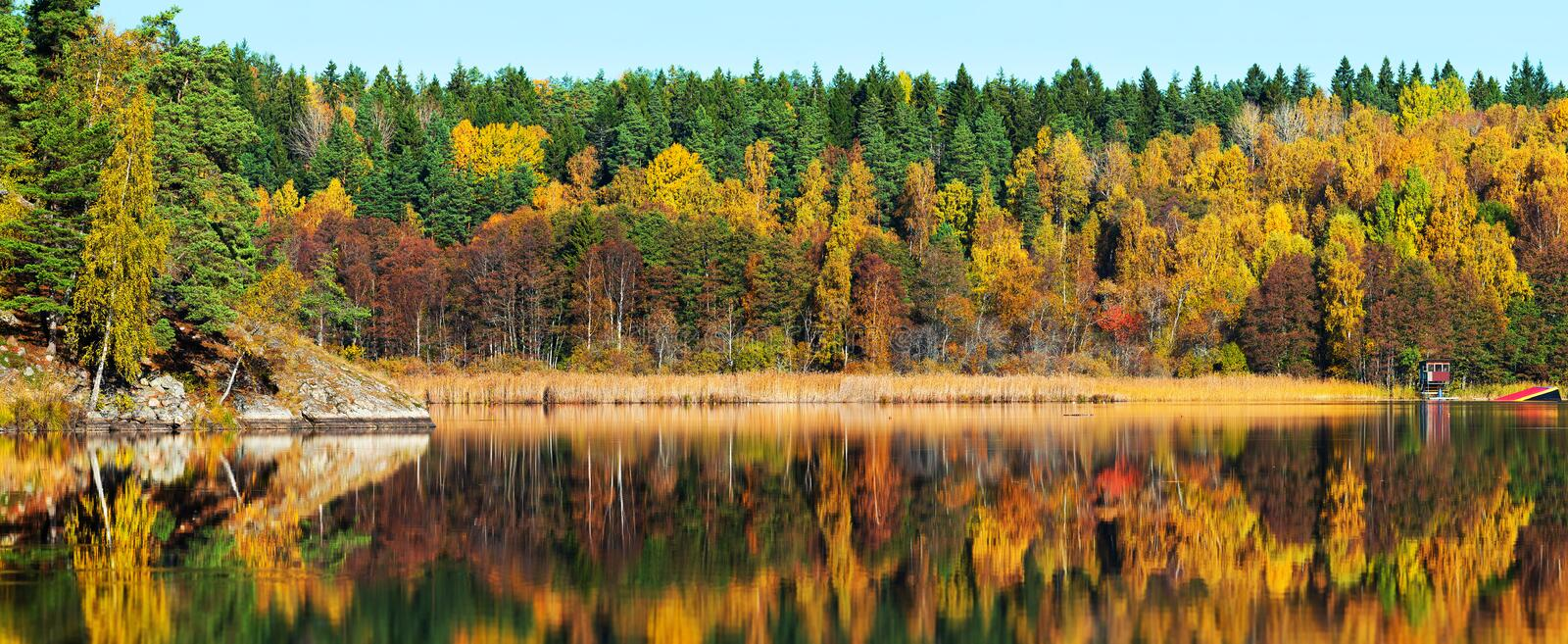 Autumn forest with reflections in a lake royalty free stock photo