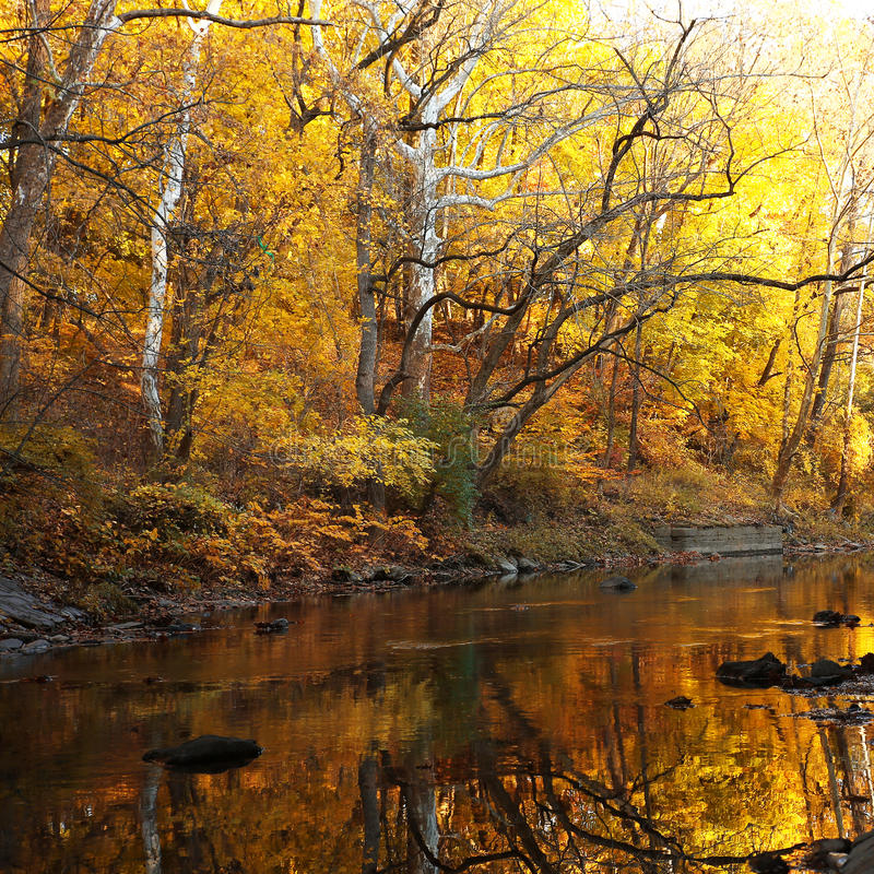 Autumn forest with river stock photography