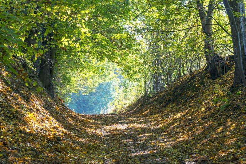 Autumn Forest Road lizenzfreie stockbilder