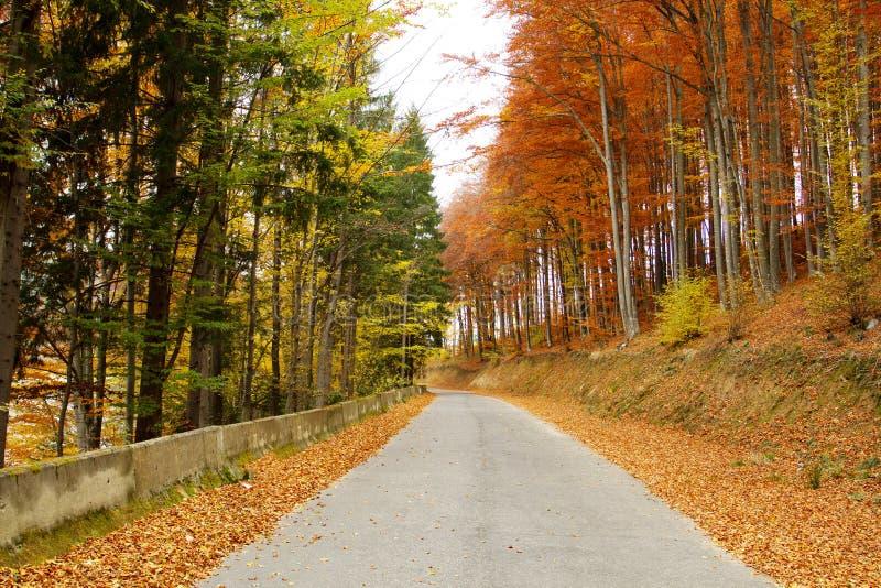 Autumn Forest Road fotos de archivo