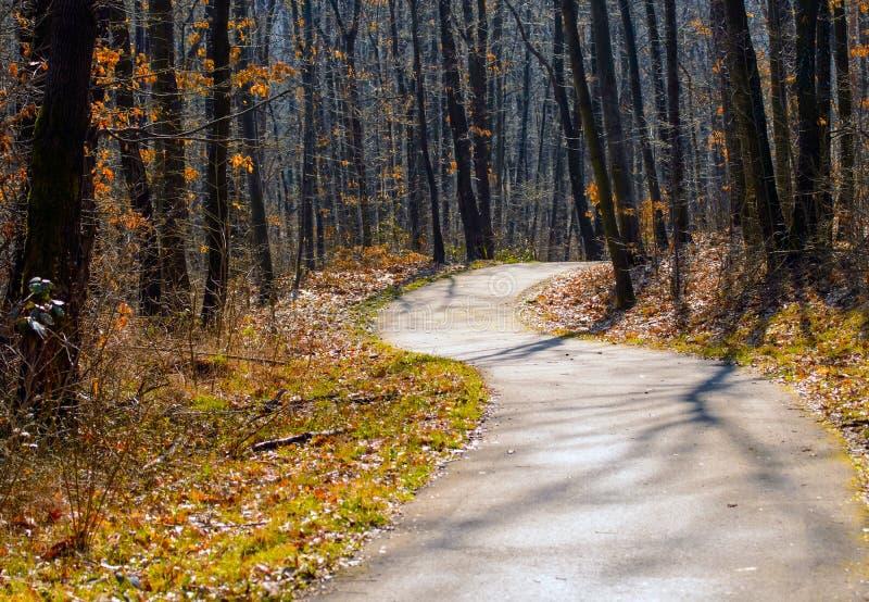 Autumn Forest Road photo libre de droits