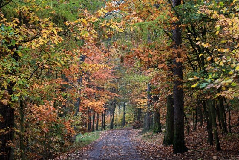 Autumn Forest Road stockbilder
