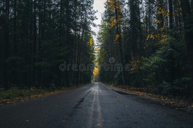 Autumn Forest Road immagine stock