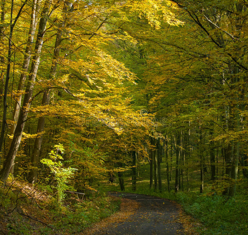 Autumn forest and road stock photography