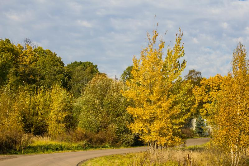 Autumn forest road with colorful yellow and orange trees against a clear sky on a Sunny day. Colorful landscape of Russian nature.  stock image