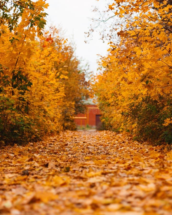 Autumn forest road landscape. Autumn leaves road view. Autumn Landscape royalty free stock images
