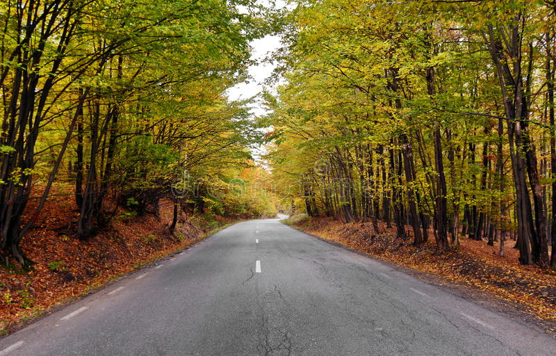 Autumn forest road stock photography
