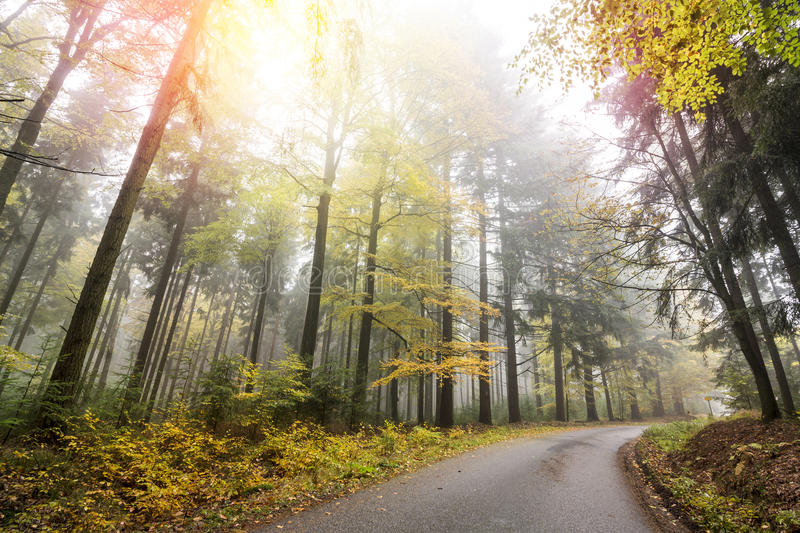 Download Autumn Forest with Road stock image. Image of mist, tree - 80672541