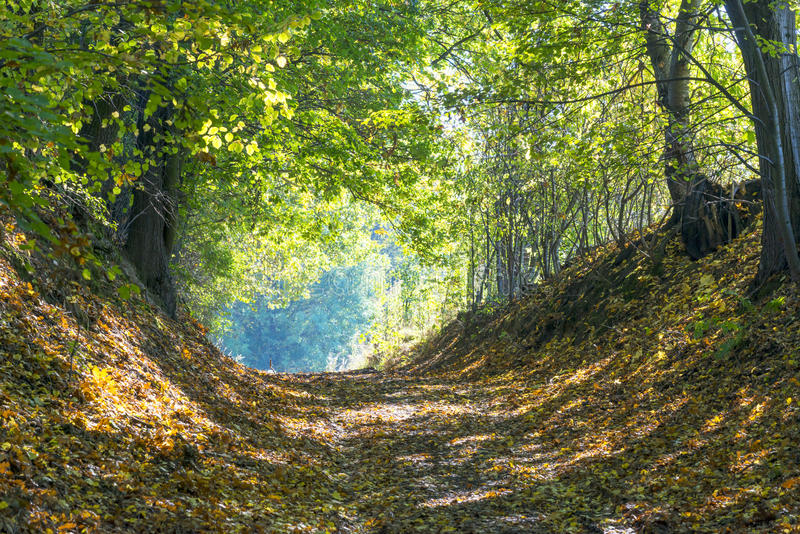 Autumn forest road. At sunny day royalty free stock images