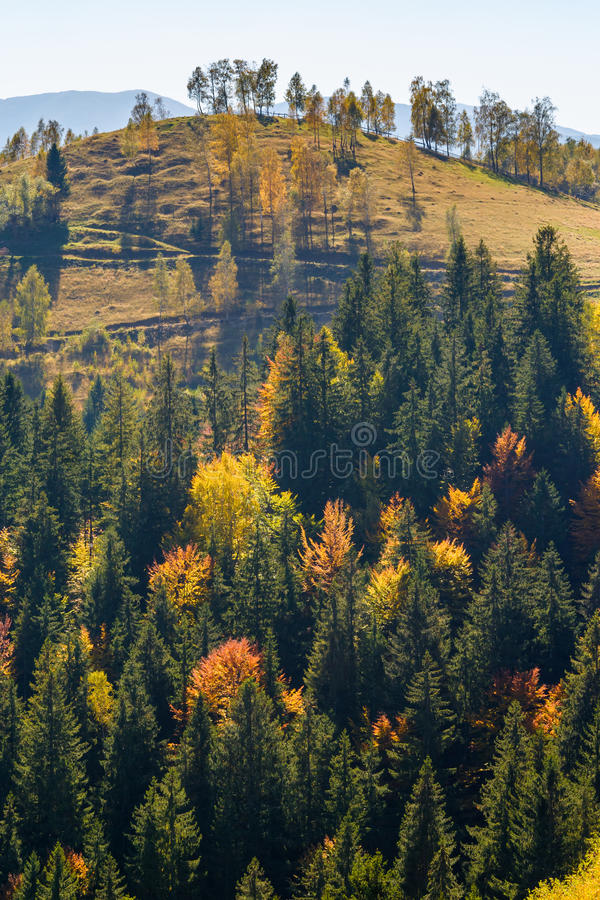 Autumn forest in Romania stock image