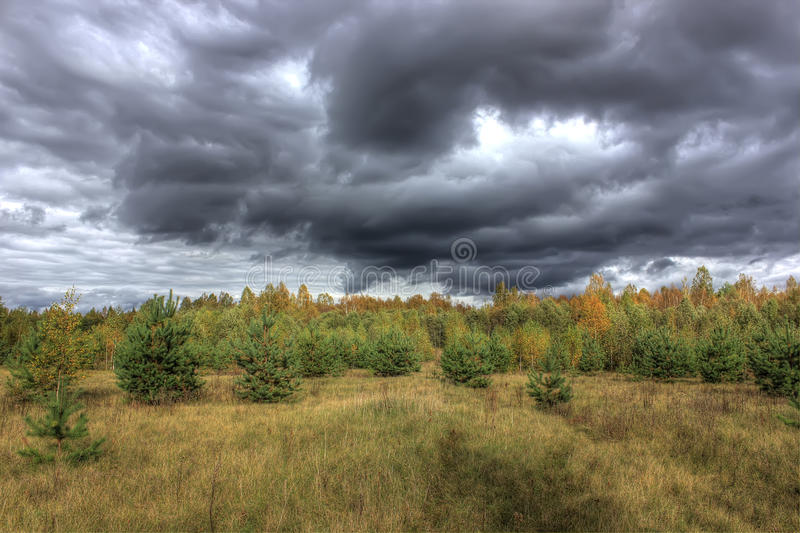 Autumn forest. Russia stock photos