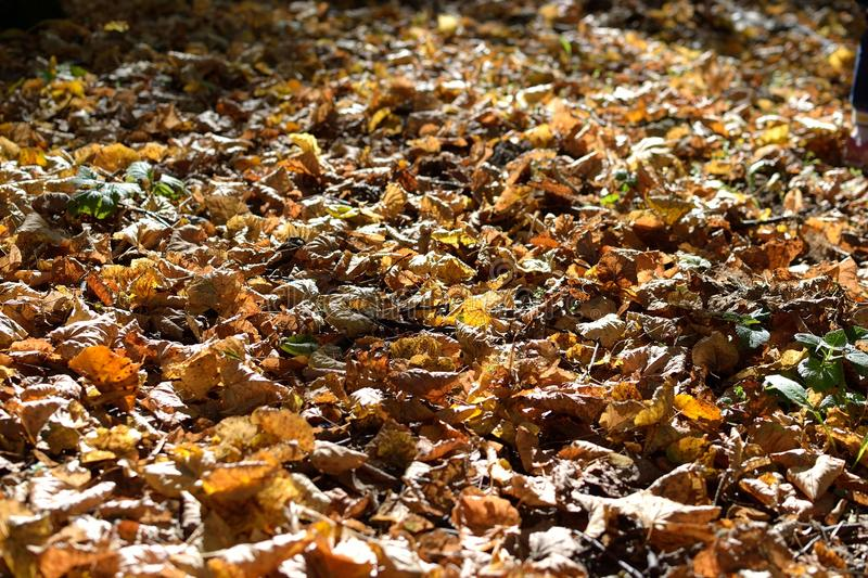 Autumn in forest royalty free stock photography